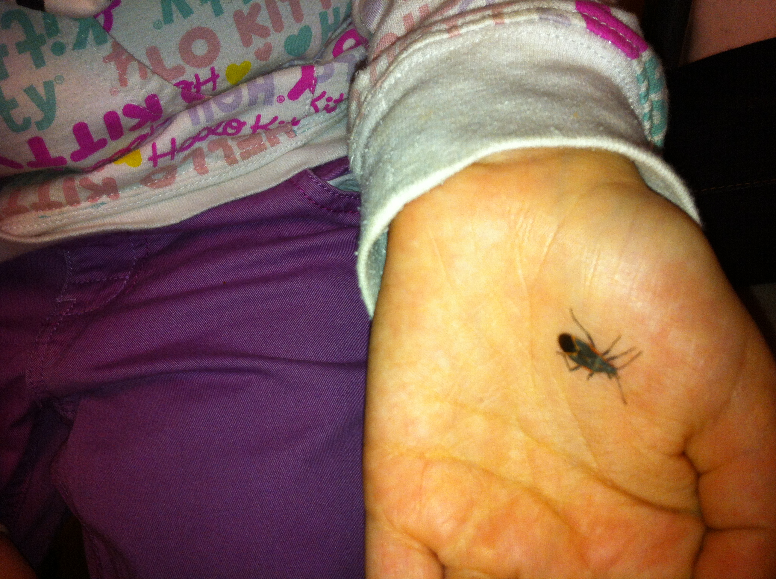 10 Cool Facts About Boxelder Bugs Kids Animal Station