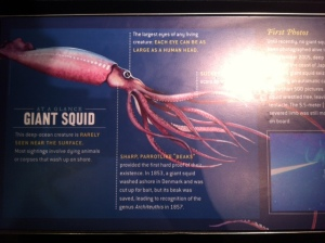 giant_squid