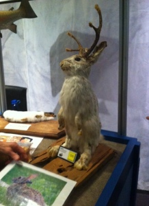 Colorado's famed jackalope is really ...