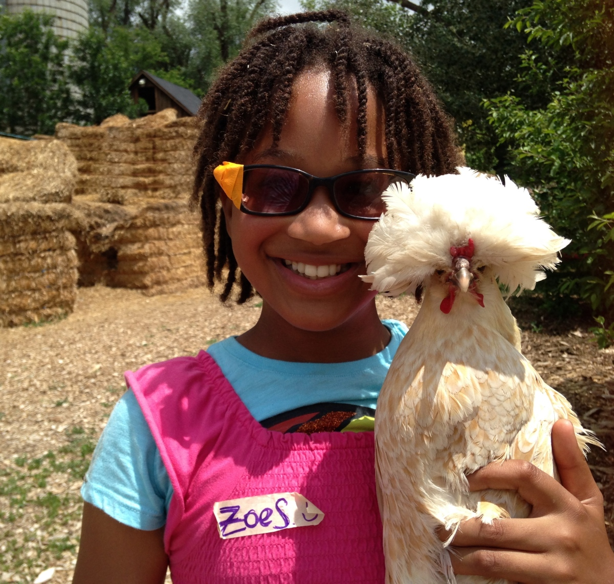 6 Cool Types of Chickens Kids' Animal Station