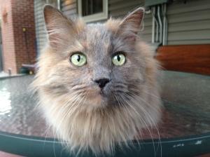 My cat Kiki being a snoop!