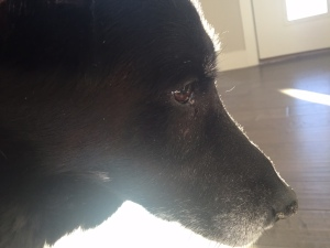 Lily (my dog) contemplating the meaning of life.