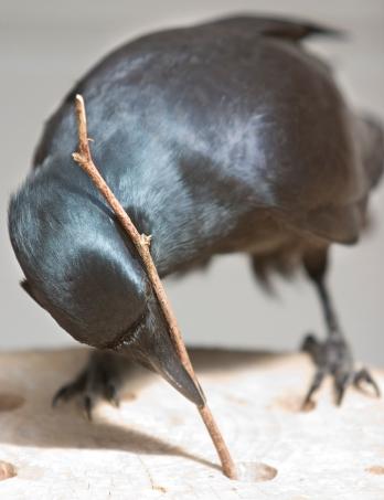 cr-crow_simonwalker_1-2