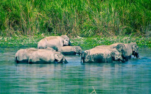 1024px-Elephant_bathing_session.jpg
