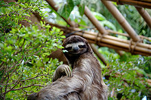 220px-SlothDWA.jpg