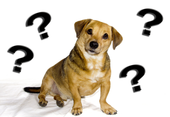 dog-with-question-marks.png