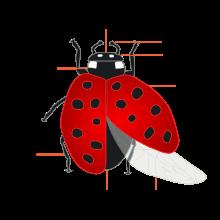 220px-Coccinellidae_(Ladybug)_Anatomy-1.svg.png